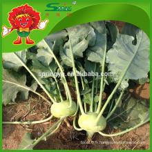 2015 nouveaux légumes verts Kohlrabi frais pour la santé