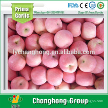 2015 Fresh Fuji Apple