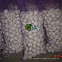 Fresh New Crop Chinesisch Pure White Knoblauch