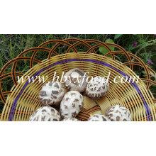 Shiitake fleur blanche séchée prix des champignons déshydratés
