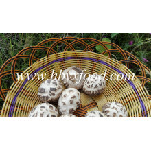 Preços de cogumelos secos Shiitake de flor branca Vegetais desidratados