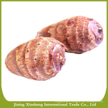 Good quality taro exporter