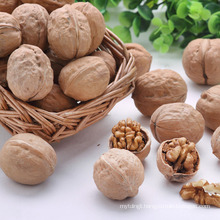 Chinese good quality walnuts prices