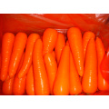 150-200g Fresh Red Excellent Carrot