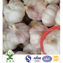 New Crop 2016 Fresh Normal White Garlic Big Size