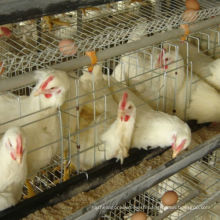 a Type Galvanized Chicken Layer Cage