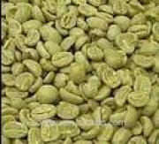 Green Coffee Bean Powder Extract