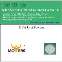 Lowest Price UVA Ursi Natural Herbal Powder