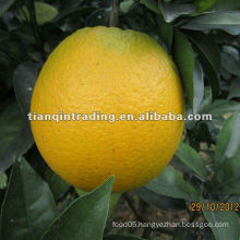 2012 new crop navel orange