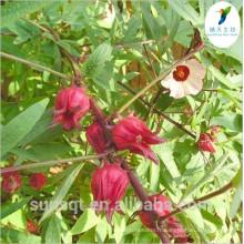 Fleurs séchées d'hibiscus d'anthocyane de 25% / extrait de fleur d'hibiscus de Roselle / hibiscus séché
