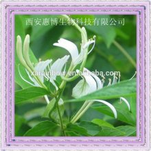 high quality magic Honeysuckle P.E. Flowers Extract powder/ Chlorogenic acid 4-98%