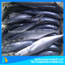 whole spotted mackerel