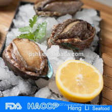 abalone with shell manufacture