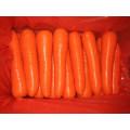 300g und frische Karotte