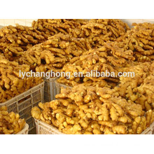 2014 new crop fresh ginger 12kg/ctn Linyi origin