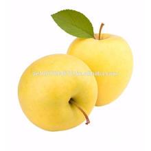 Gansu Province Yellow Apple