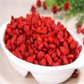 vente en gros sec lycium barbarum fruit goji