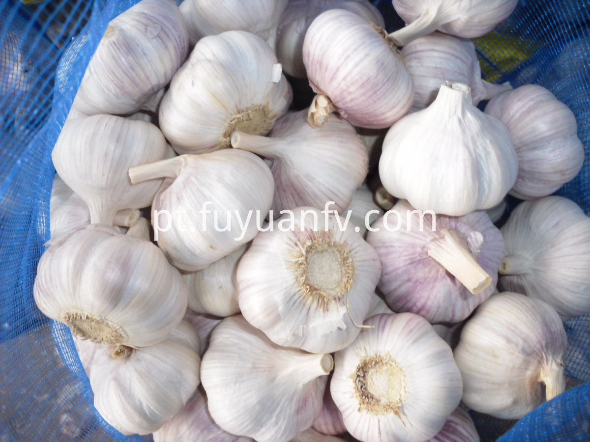 Normal White Garlic