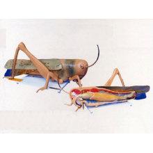 Locust Disse...