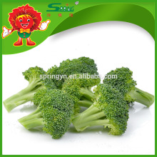 Preço por atacado de fábrica China Fresh Broccoli