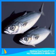 Melhores frutos do mar com peixe de cavala fresco congelado