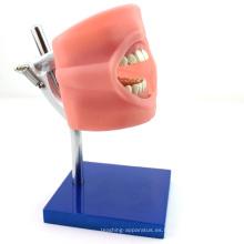 VENDER 12557 Sistema de práctica de simulación oral Phantom Head para escuela dental