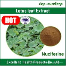 100% Natural Dried Lotus Leaves Extract Powder 2% Nuciferine
