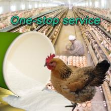 Polvo de allicina grado de alimentación en extracto de ajo con alto contenido de vitaminas para pollos de engorde