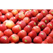Bonne pomme délicieuse Chine FUJI