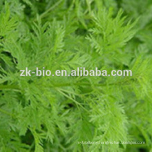 Manufacturer Supply Argy Wormwood Leaf Extract Powder Argy Wormwood Leaf Extract