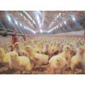 Hangar de volaille avec équipement automatique de poulet