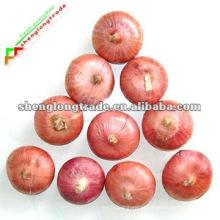 2011 melhor qualidade cebola vermelha fresca (própria fazenda)
