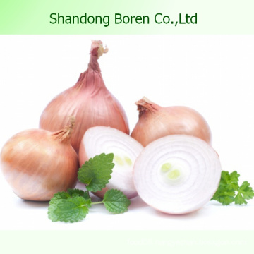 2015 New Season Fresh Red Onion