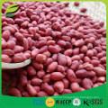 Kernels de amendoim da pele vermelha da China 50/60