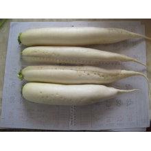 2011chinese barato rabanete branco 500g