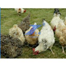 Malla de alambre de pollo galvanizado de alta calidad (TS-E22)