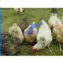 High Quality Galvanized Chicken Wire Mesh (TS-E22)