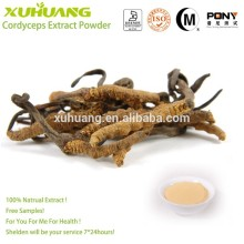 Free Samples 100% Natrual Factory Supply Cordyceps Extract for Capsules
