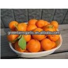 Bajo precio naranja fresco