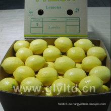 Hohe Qualität der frischen Zitronen