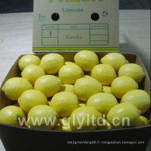 Haute qualité de citrons frais