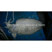 Ganze runde gefrorene Tintenfische
