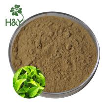 Pó de extrato de chá verde solúvel em água l teanina