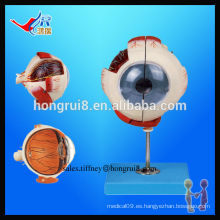 Modelo Eyeball Avanzado ISO, Ojo Humano