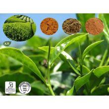 Экстракт листьев зеленого чая 10: 1
