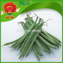 Fèves fraîches Haricots verts Légumes frais