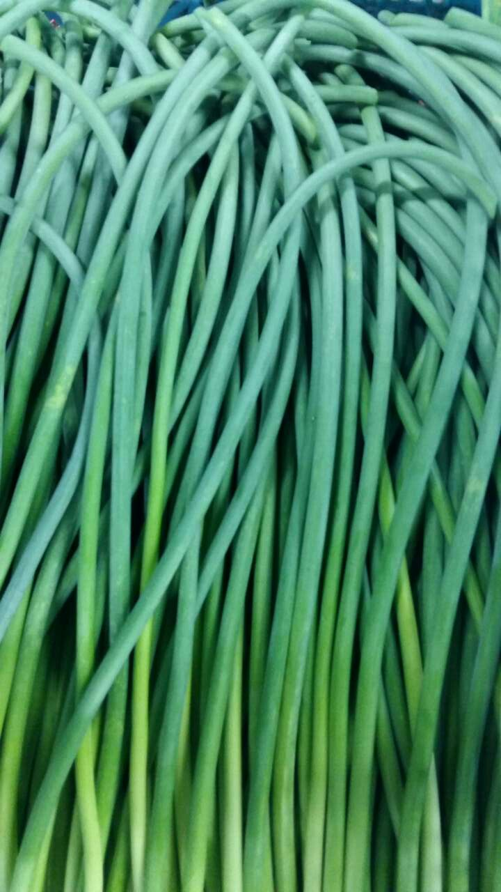 Fresh Green Pollution-free Garlic Shoots