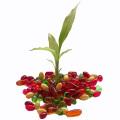 Hemp seed oil veg Softgel