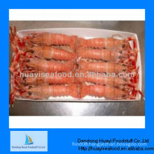 Supply good quality sea scampi