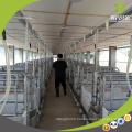 Cages de porc de mise bas de matériel d'élevage de porc de haute qualité à vendre
